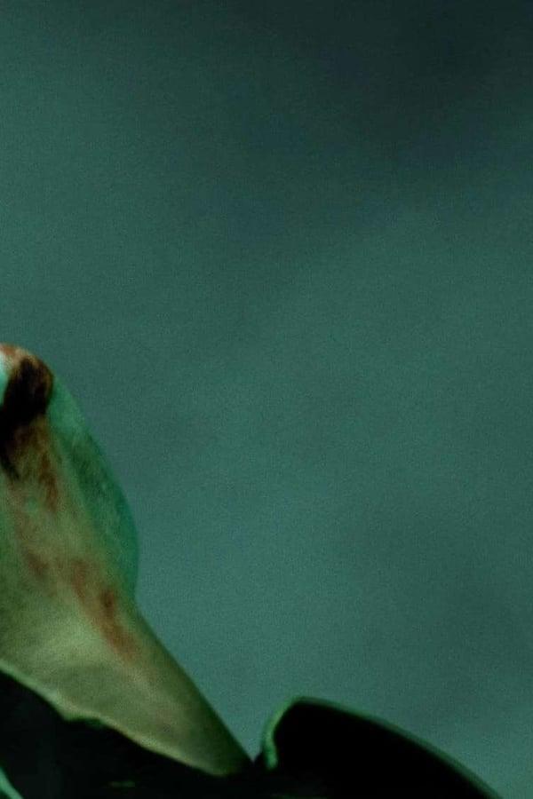 Joker-0 thumbnail